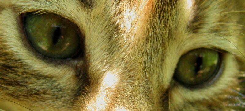 Koukou cat eyes