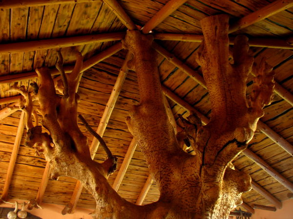 tree trunk roof