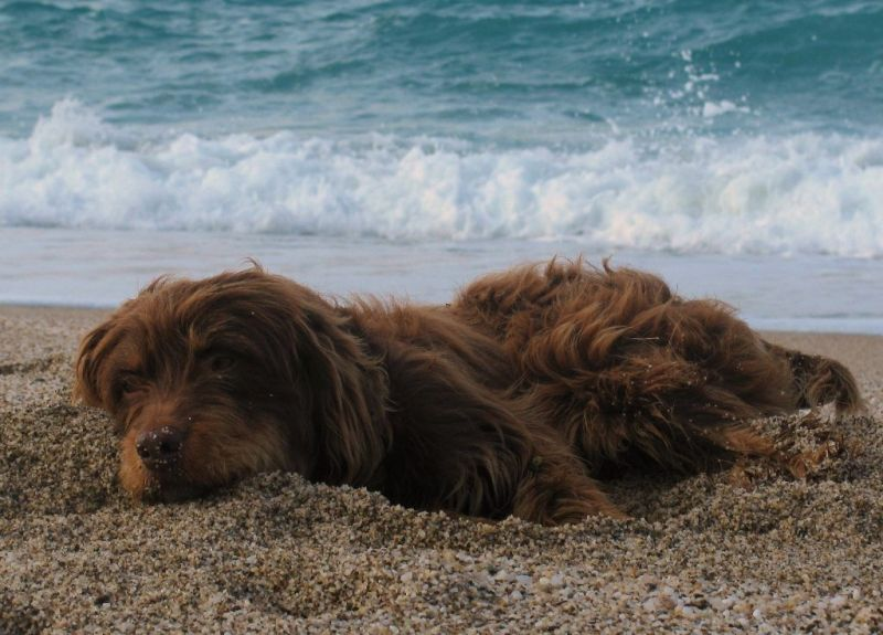 dog agii Saranta beach pelion magnisia greece