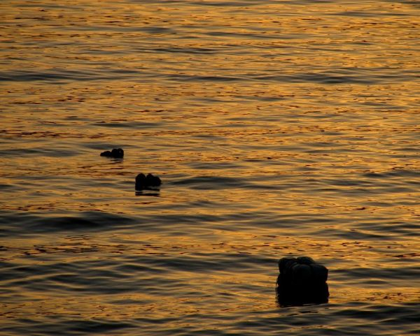 BUOYS SUNSET