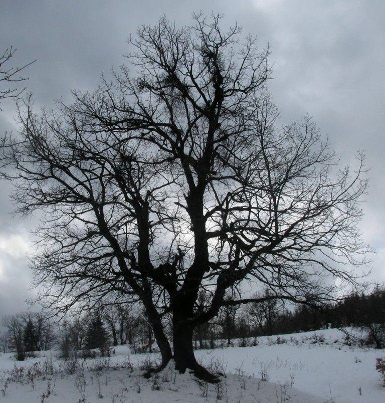 tree snow plastira lake
