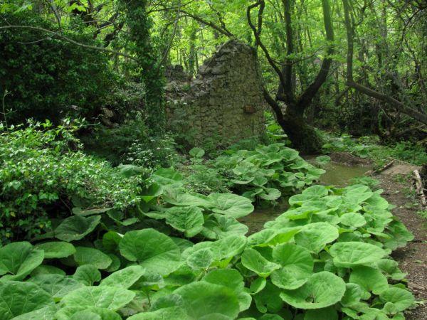 forest iti mountain pavliani