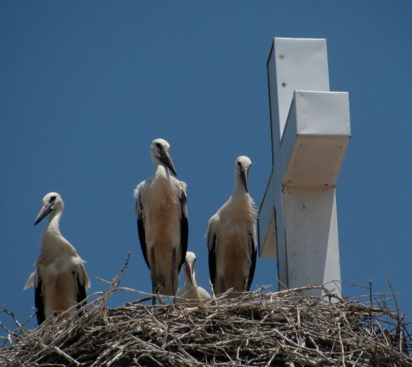 pelicans roof church
