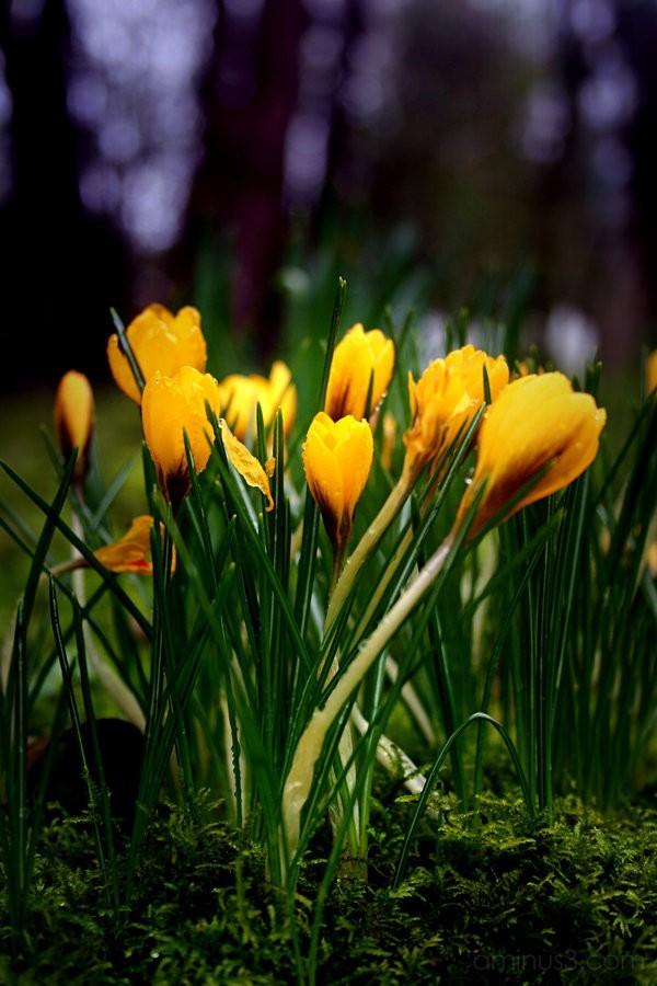 flower spring green