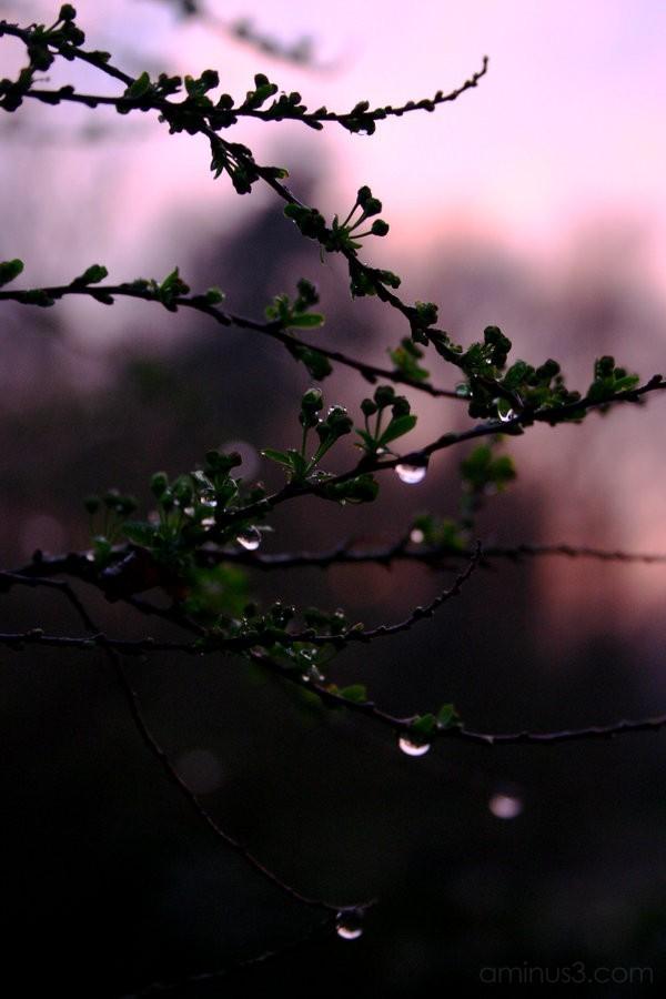 art photography color little drops green