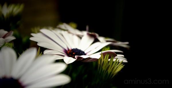 Deep Flowering