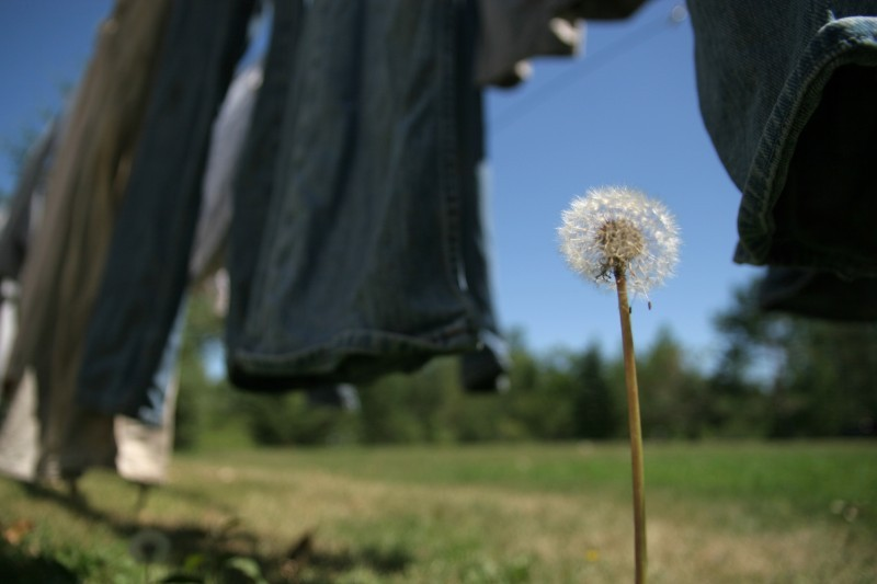 Sarah Guck dandelion jeans photo Dredger