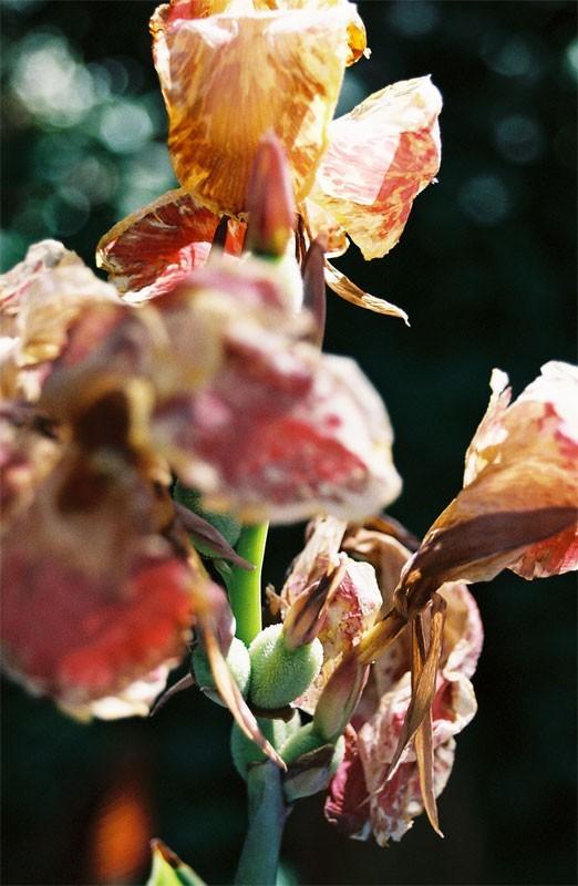 dan dredger sarah guck orange flower photo blog