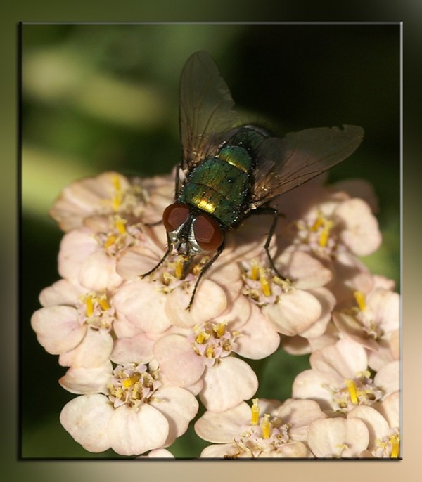a fly in our garden