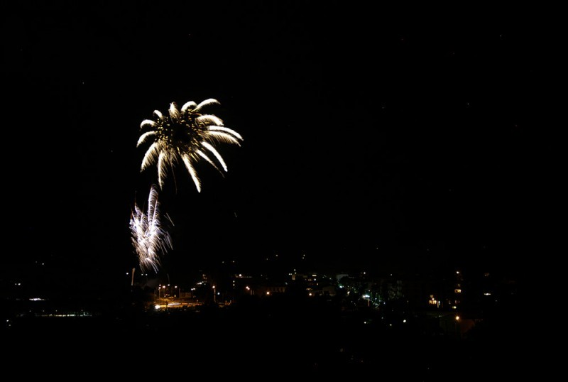 Fireworks Sunflower