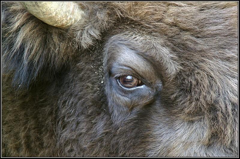 Bull-eye