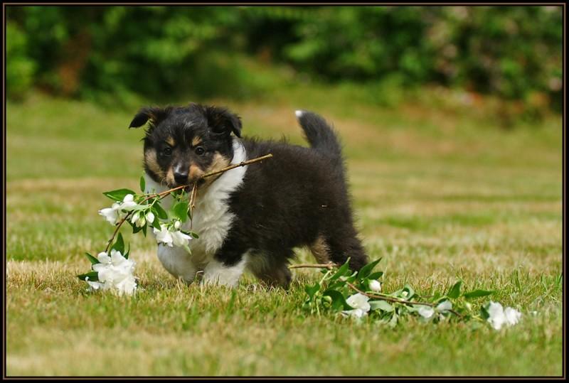 flower-puppy_2