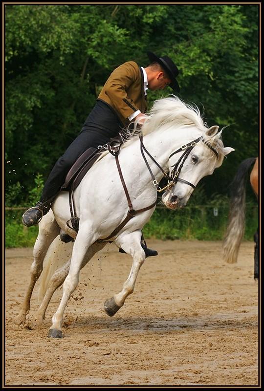white horse_2