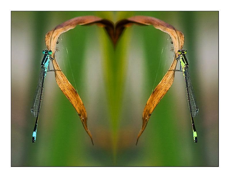 dragonfly-heart