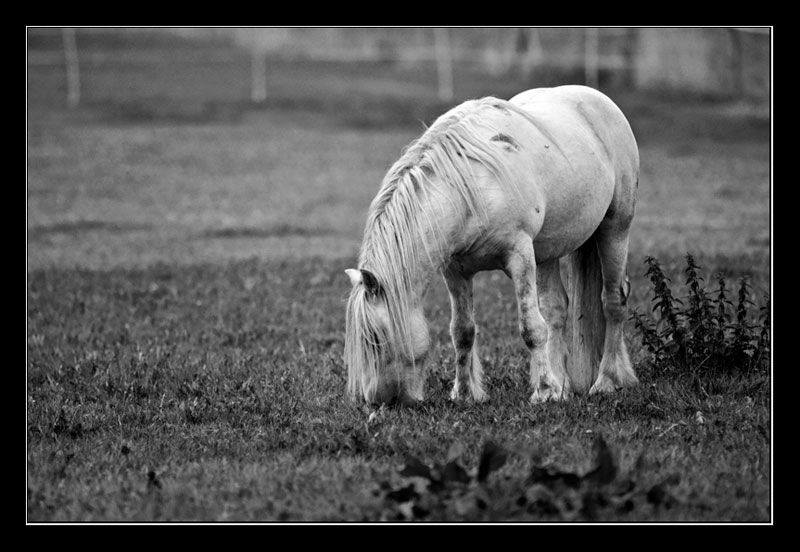early morning horse