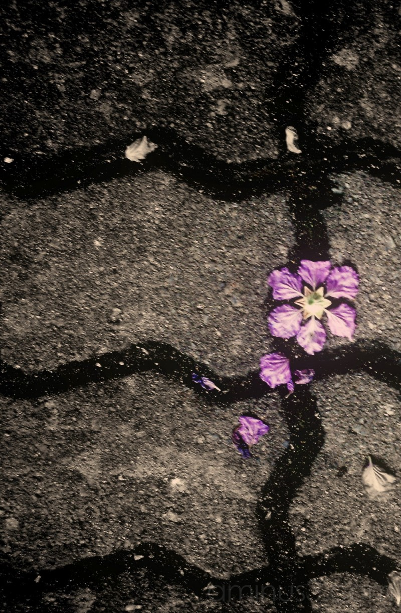 flower on the pathway