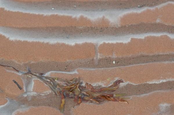 seaweed sand ripples