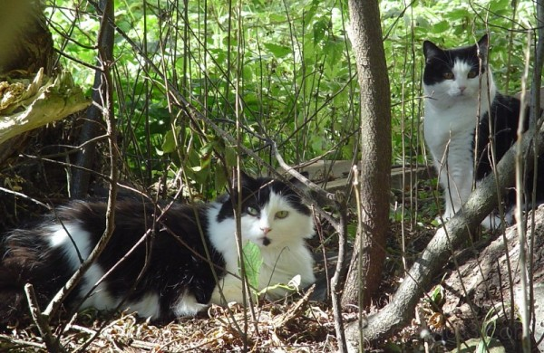 cats garden trees