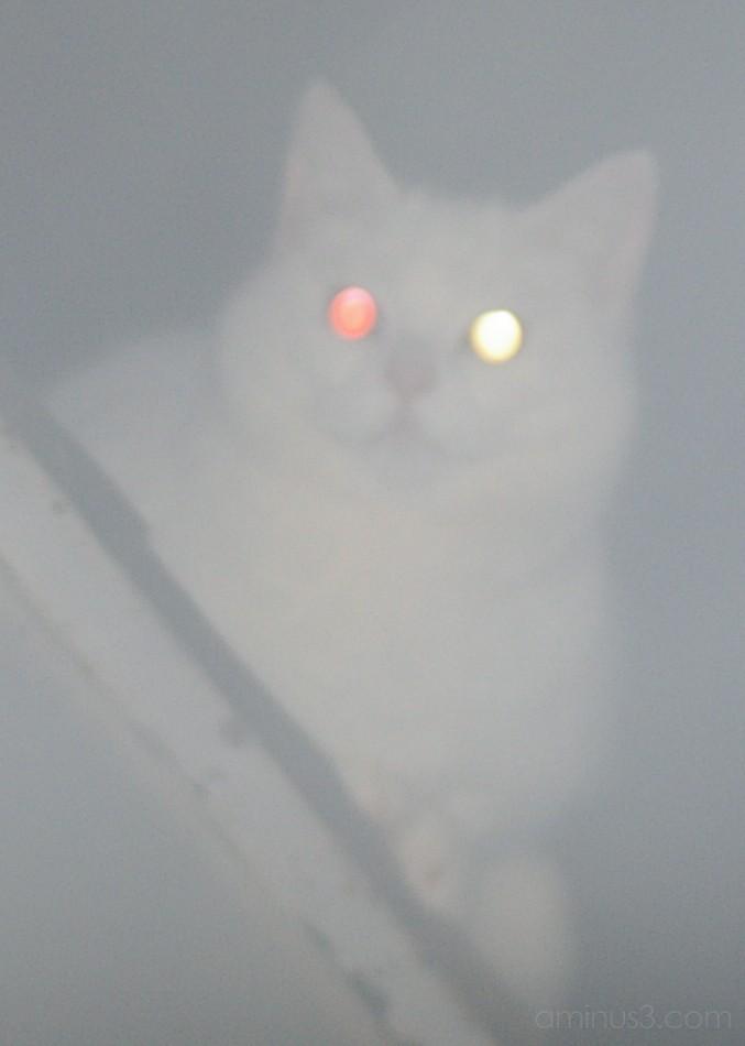 cat ghost