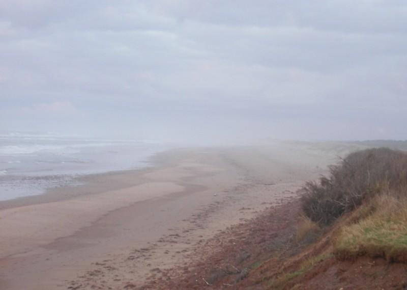 fog sand dunes pink