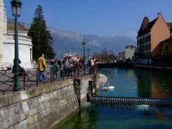 photo of swans in annecy french alps
