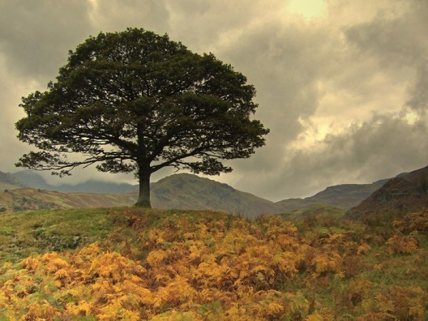 Lone Tree & Autumn Bracken