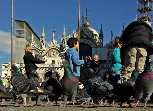 A Pigeon's eye view of St. Mark's Square