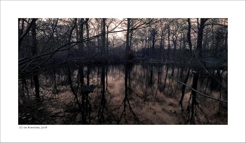 Pond - Trees