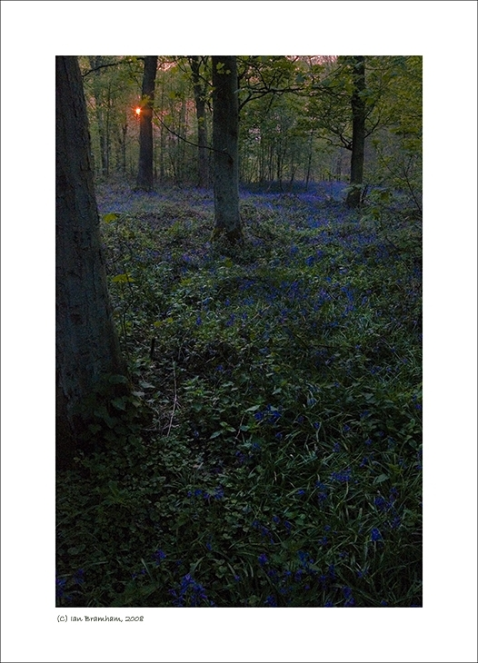 Dusk in the Woods