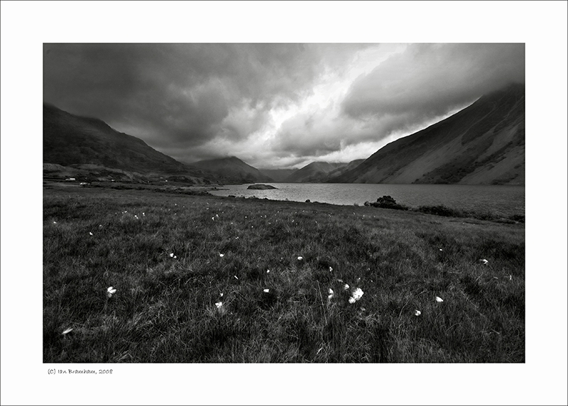 Cottongrass at Wast Water