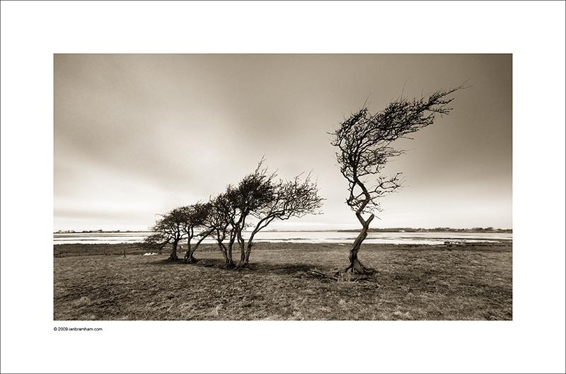 Windworn