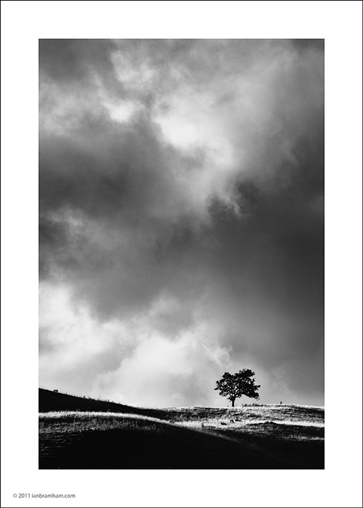 a b&w photo of a lone tree