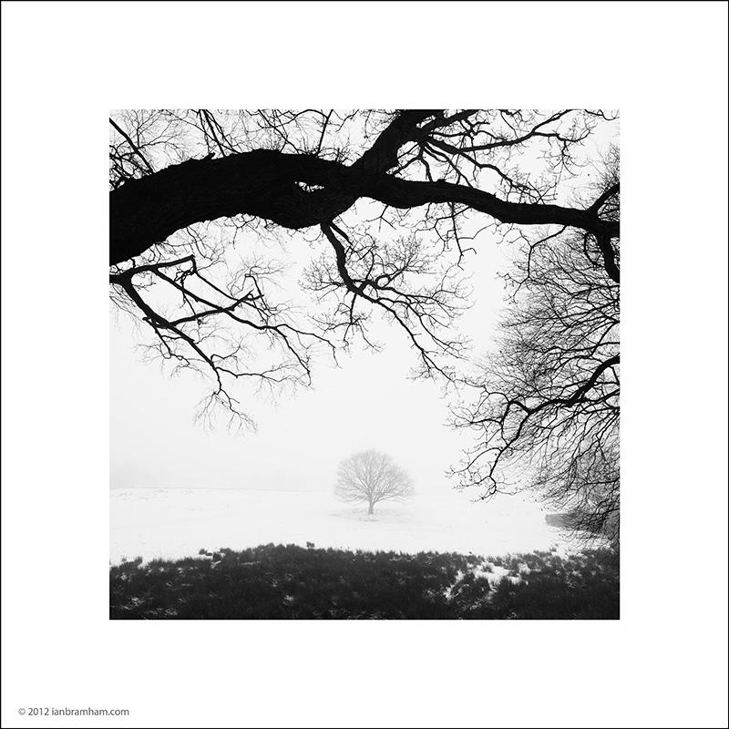 Tree - Snow