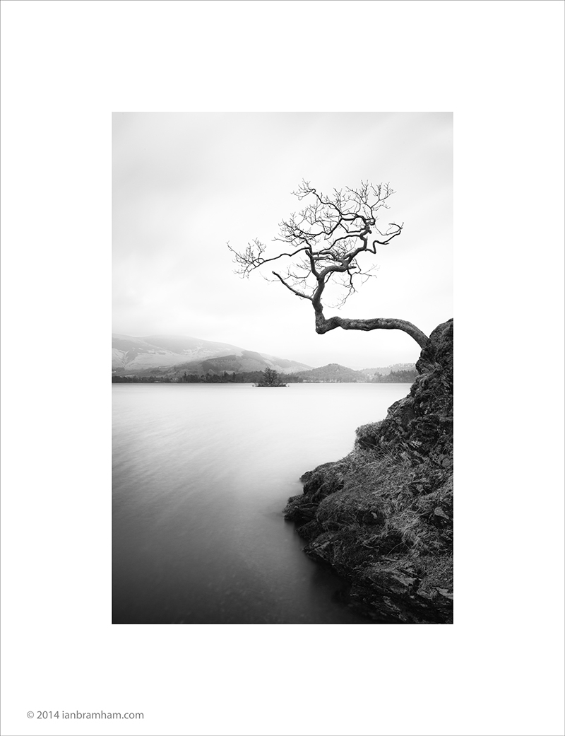 Lake District Tree
