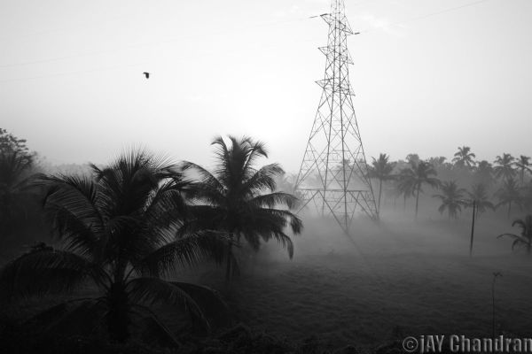 Morning fog... in black & white
