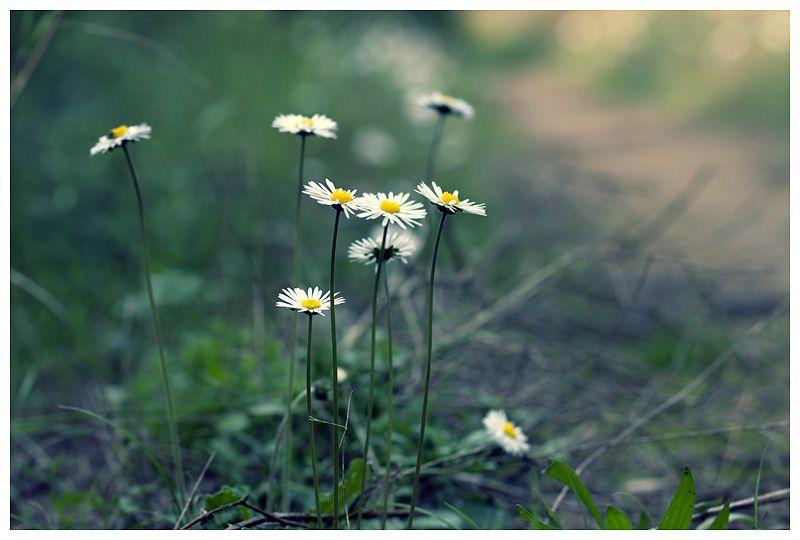 Ses floretes