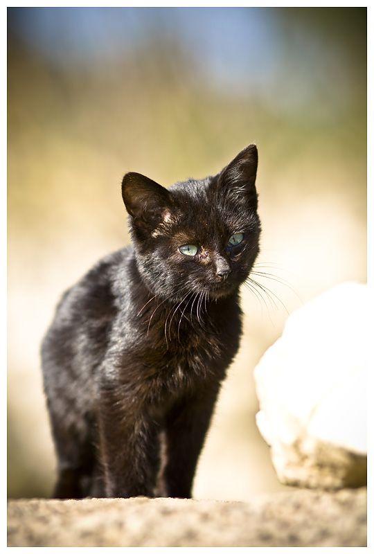 Miau?