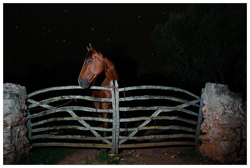 A horse at night