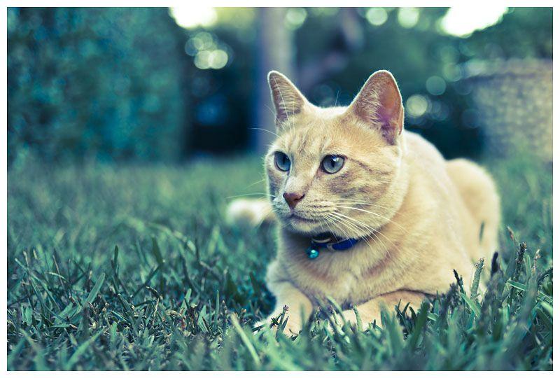 Me parece haber visto un lindo gatito