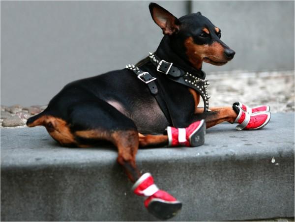 Ser perro en New York