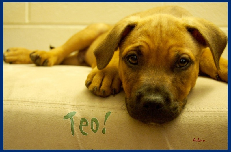Welcome Teo!