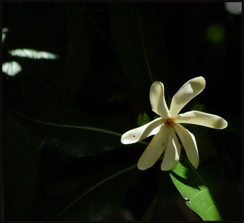 The flower of my garden