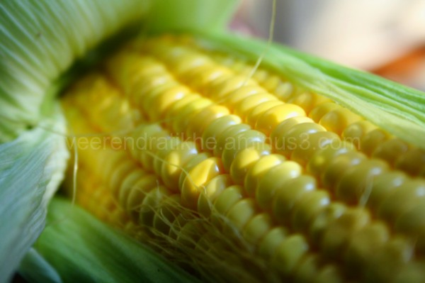 corn micro