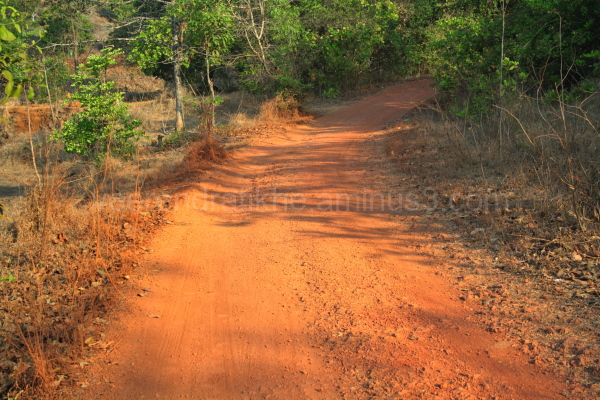These are famous typical konkan rural walkways