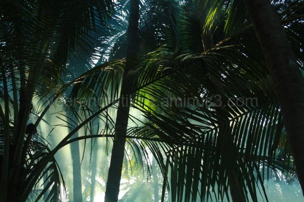 lights through coconut trees
