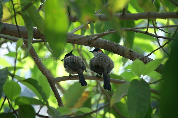 two birds on branch ..