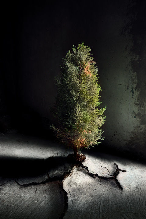 Should we cut the last tree for christmas ?