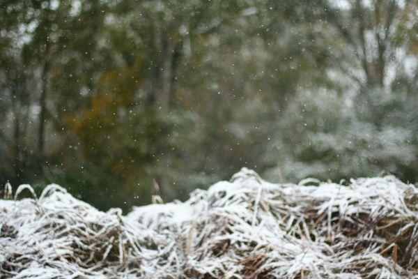 Let it Snow Let it Snow