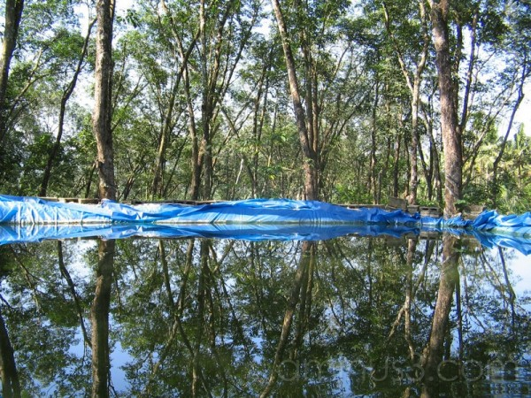 Trees reflected in a rainwater harvesting pit