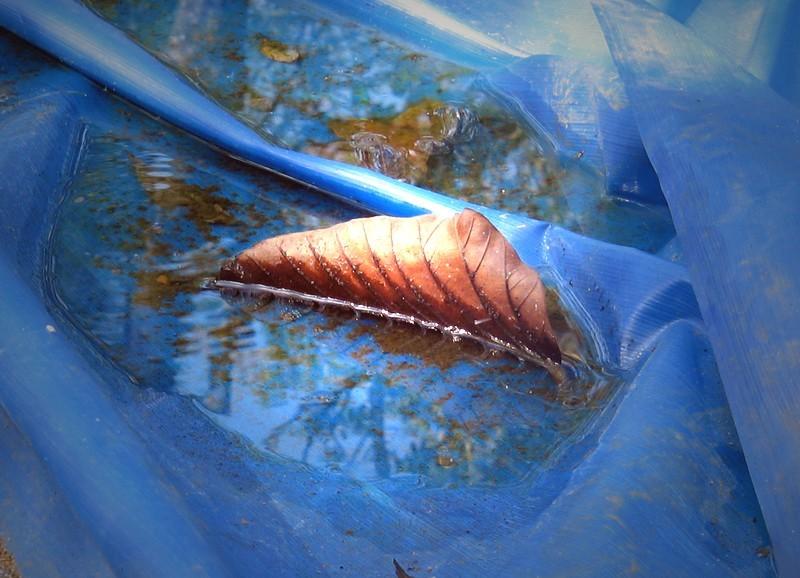 Does a lone fallen leaf an autumn make?